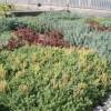 BURÉS: Ultimos avances en sustratos para la jardinería