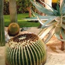 (ES) El cuidado de los cactus y otras suculentas durante el verano