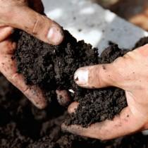 (ES) La importancia del pH de la tierra