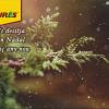 Burés os desea Feliz Navidad y próspero Año Nuevo