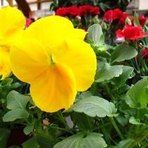 (ES) Videotutorial: ¿Cuánto sustrato necesito para mi jardín?