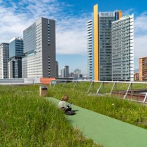 Visita gratis el Terrat Viu, la primera cubierta verde silvestre de Barcelona con sustrato Burés