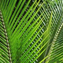 Sustrato Kokofina Coco Natural 100%