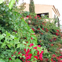 (ES) Preparar el jardín y suelo de cultivo para la primavera: podas, limpiezas y aporte de mantillo.