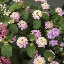 Tiempo de trasplantes: tendencias en jardinería