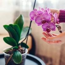 (ES) Orquídeas, uno de los regalos estrella el Día de la Madre