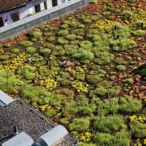 Cubiertas verdes, clave para enverdecer las ciudades