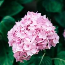 (ES) A cada tipo de planta su Sustrato Burés