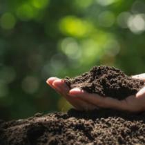 Semana Internacional del Compost