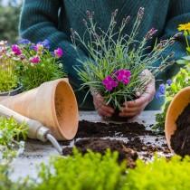 Sustrato universal, ideal para tus plantas de exterior