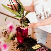 La orquídea, protagonista en tu hogar