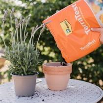 (ES) Terratest y planta aromática