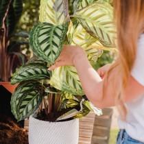 (ES) Sustrato Universal para el cuidado de tus plantas