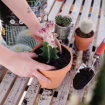 (ES) Cactus y suculentas: trasplante en septiembre