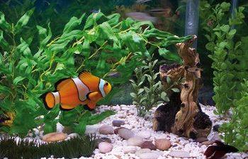 Zoològics - Aquaris