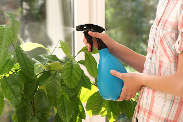 Bichos en mi maceta c mo evitarlos for Como evitar que salga hierba en el jardin