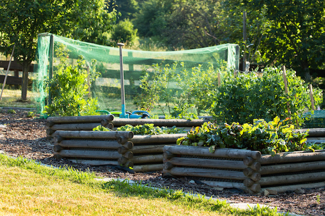 Hacer agricultura ecol gica for Rotacion cultivos agricultura ecologica